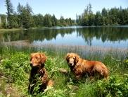 Blitz and Nellie taking a break for a swim at Lake Prairie