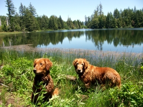 Blitz and Nellie taking a break for a swim at Lake Prairie