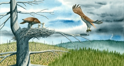This spread that I did is from Firestorm In The Forest.