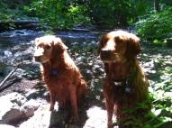 Nellie and Blitz