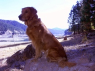 Nellie in her youth at Iron Canyon Reservoir.