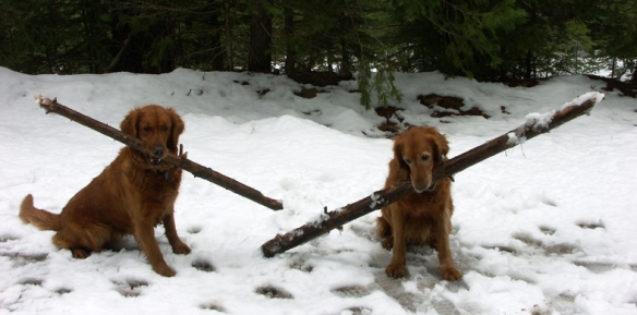 The big stick contest. Blitz and Nellie