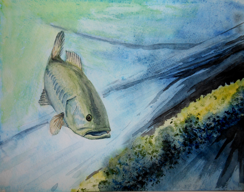 Large Mouth Bass Study 1 The Forester Artist