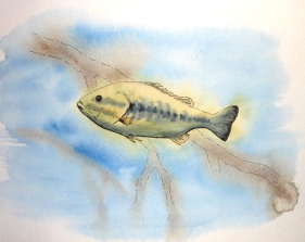 Large Mouth Bass Study