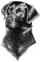 Labrador Retriever, lab, labs, pen and ink