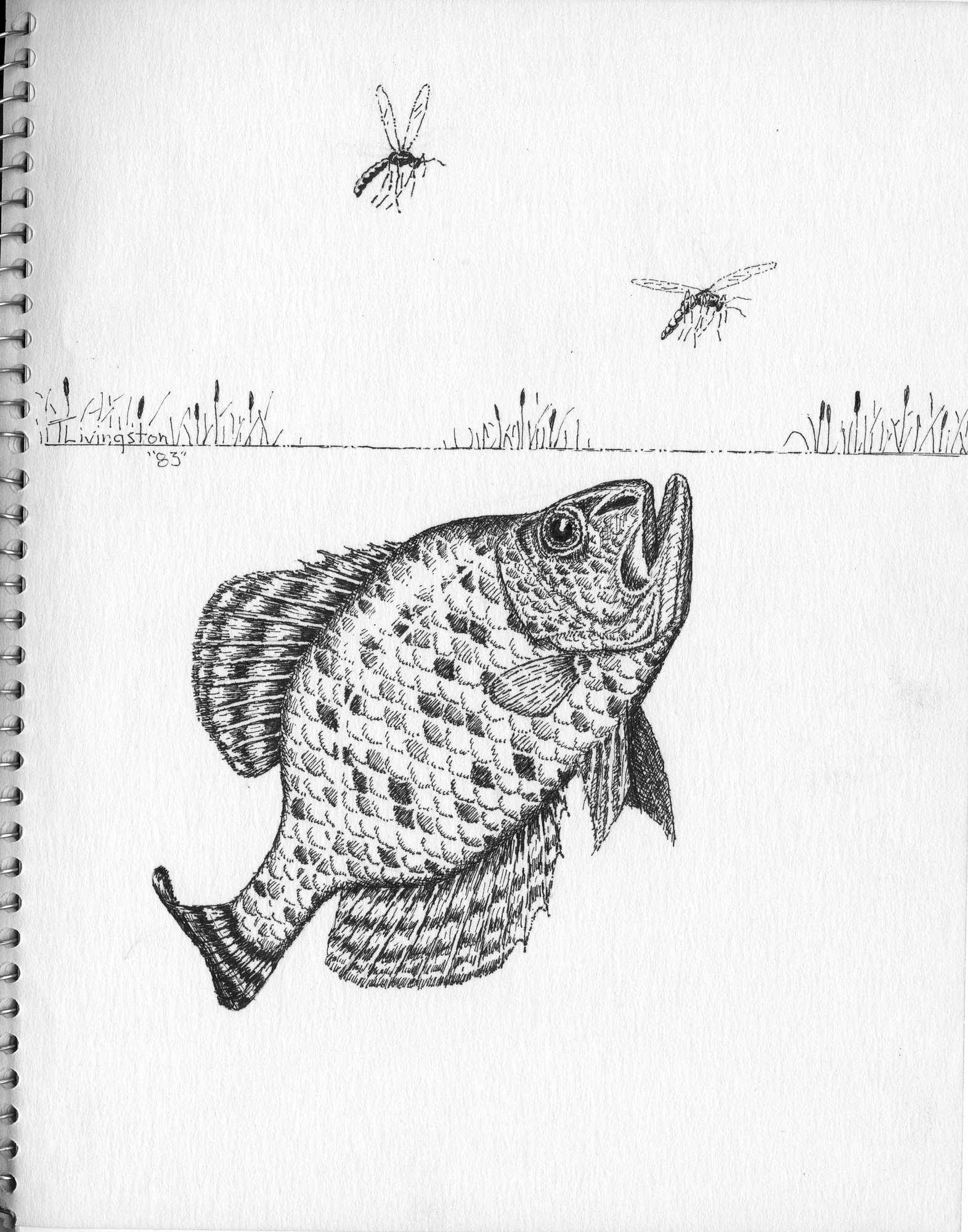 fish the forester artist
