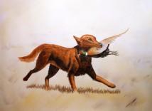 Nellie In Watercolor
