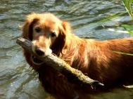 Nellie loves her sticks.
