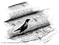 black bird, pen and ink, photo, photography, logs, salvage, forestry, timber