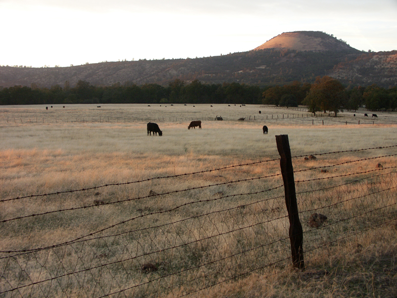 Black Butte, cinder cone, cattle, black angus