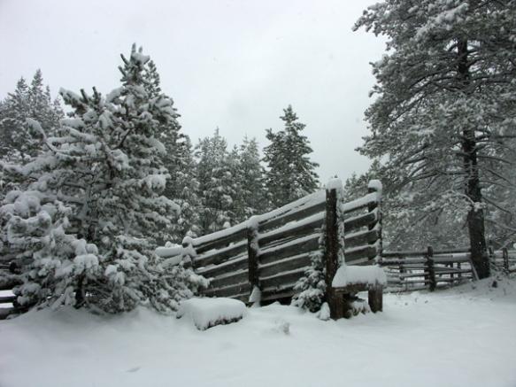 loading ramp, chute, cattle