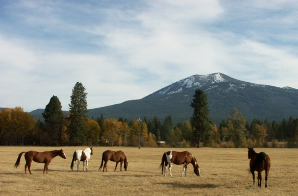 Horses, horse, Burney Mountain