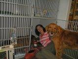 Nellie, snake bite, veterinarian