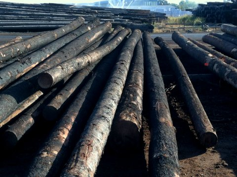 logs, salvage logs, fire salvage, burned, photo, photography
