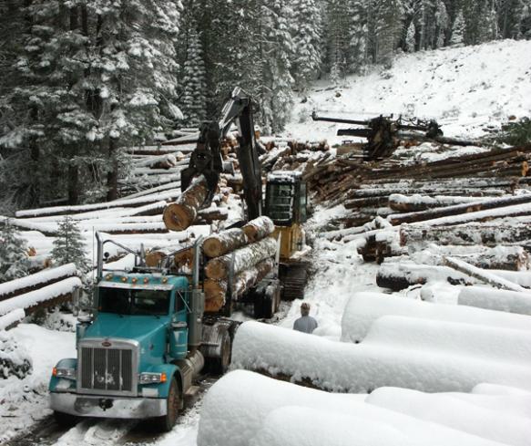 logging, loader, delimber, landing, winter logging