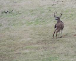 Big-Buck-sm-2