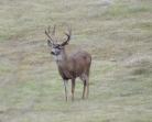 Big-Buck-sm