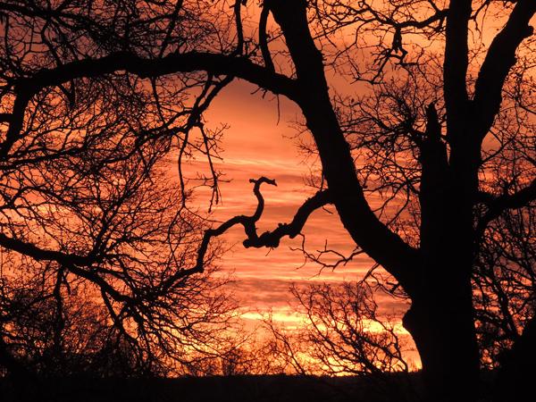 sunrise, orange, photography, nature