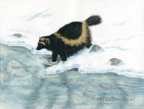 wolverine, watercolor, watercolour