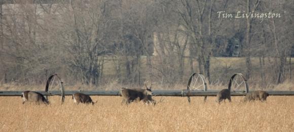 Deer, herd, feeding, doe, buck