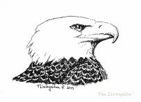 Bald Eagle, eagle, art, sketch, drawing, pen and ink
