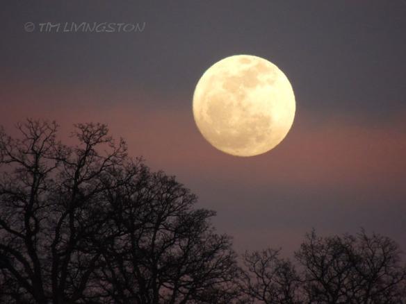 moon, luna,