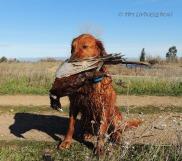 Blitz wirh Pheasant 2