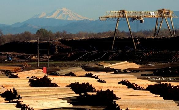 Mt Shasta, Shasta, log deck, pole yard,  mill site, sawmill, photography
