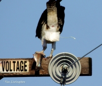 The osprey probably won't be too happy with the new residents.
