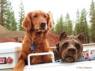 Chainsaw carving, dog carving, dog, golden retriever, Blitz, logger, forester