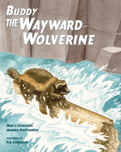 Buddy The Wayward Wolverine, wolverine, gulo, gulo gulo, childrens book, watercolor
