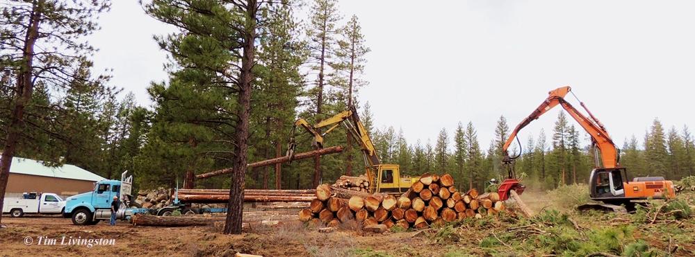 logging, logger, log truck, loader, processor, wood, forest, forestry, photography