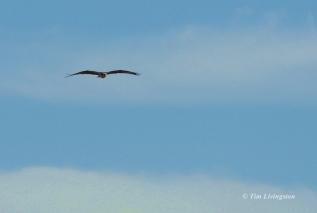Osprey flight 2