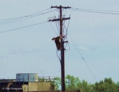 Osprey flight 3