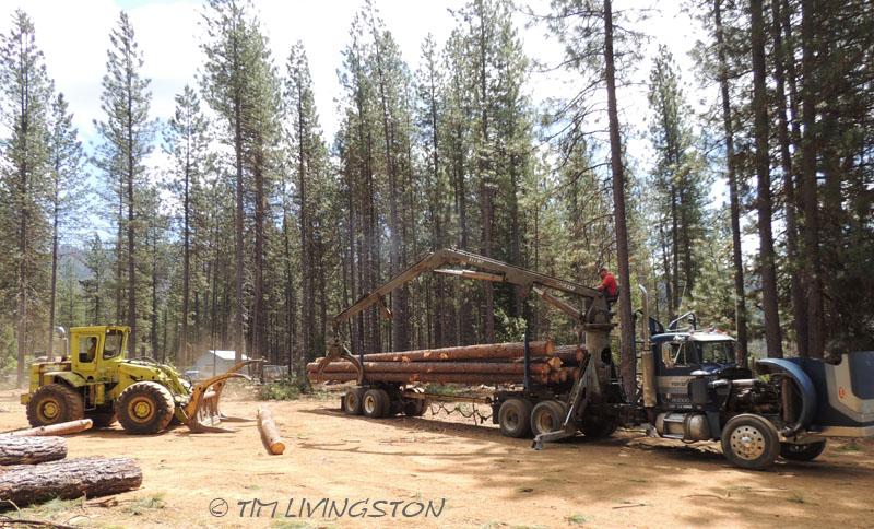Loading log truck, loader, loader, logging, logger, photography