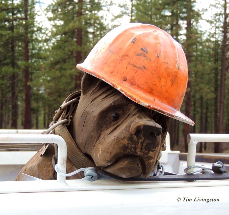 chainsaw carving, dog carving, logger's dog