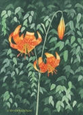 Tiger Lily, watercolor, watercolour, painting