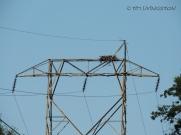 Osprey, fledgling, nature, wildlife, photography, nest