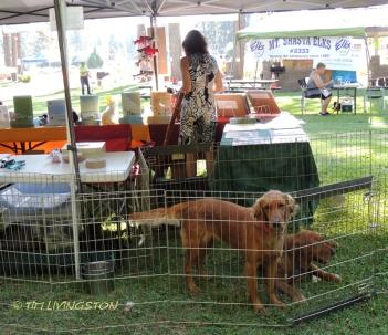 Lumberjack Fiesta, logging sports, timber sports, lumberjack sport, picnic, Americana, McCloud, watermelon eating contest, horseshoes, softball, Red Tail Publishing