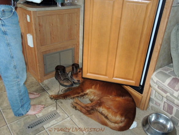 """Blitz chills after an exhausting day of events. """"Don't get up Blitz, but I need to get into the refrigerator!"""""""