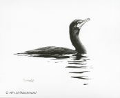 pen and ink, pen, drawing, cormorant, wildlife, nature
