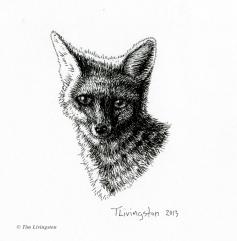 fox, vixen, pen and ink, art, wildlife, nature