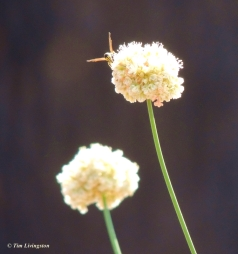 wasp, wildflowers