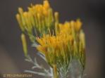 sage, wildflowers