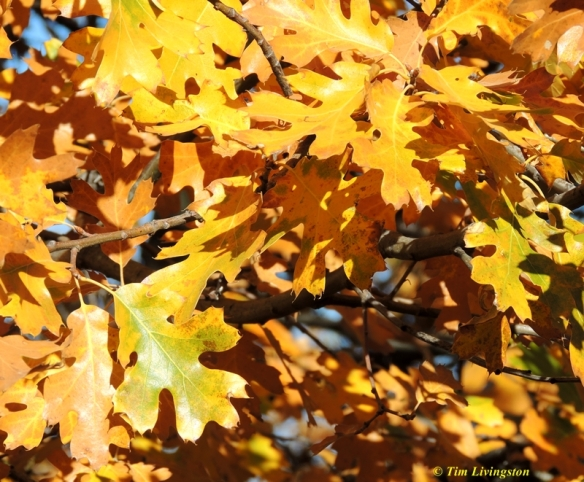 Fall colors, yellow, nature, photography