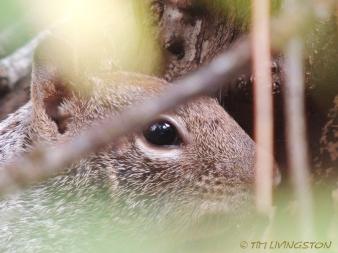 squirrel, wildlife, nature