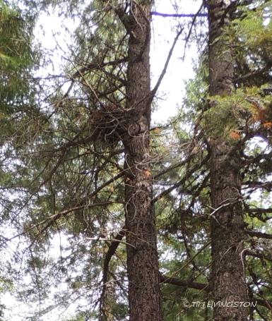 Nest, wildlife, forestry