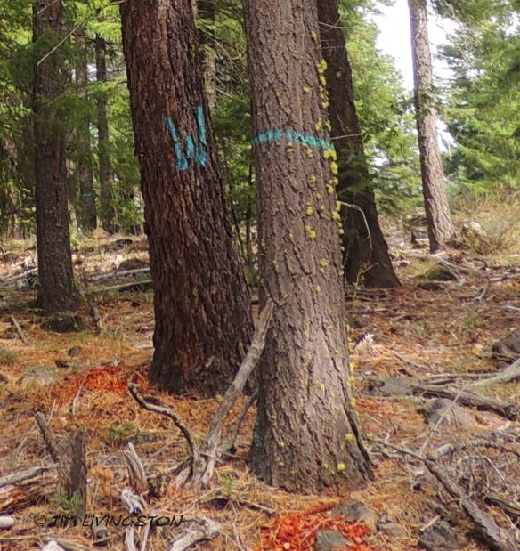 W-tree