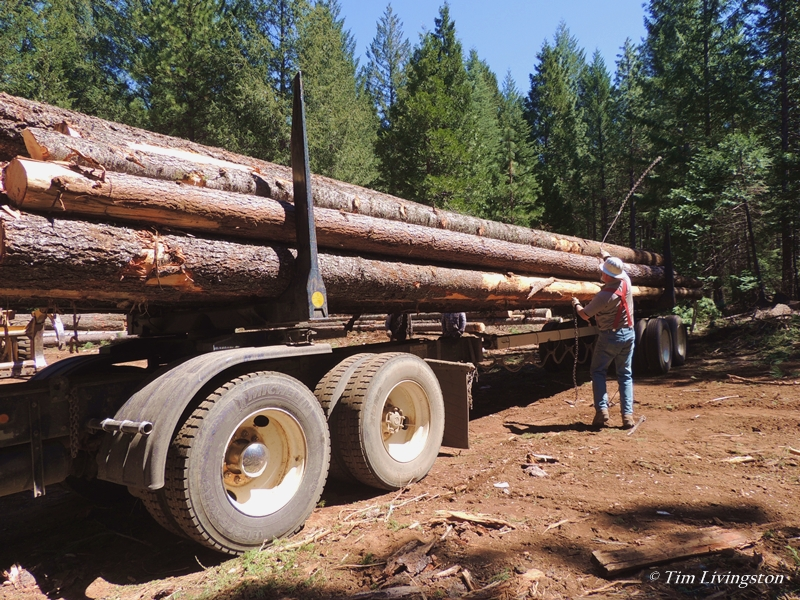 logger, logging, logs, log truck, logging truck, timber, forestry