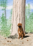 watercolor, watercolour, Ponderosa pine, golden retriever